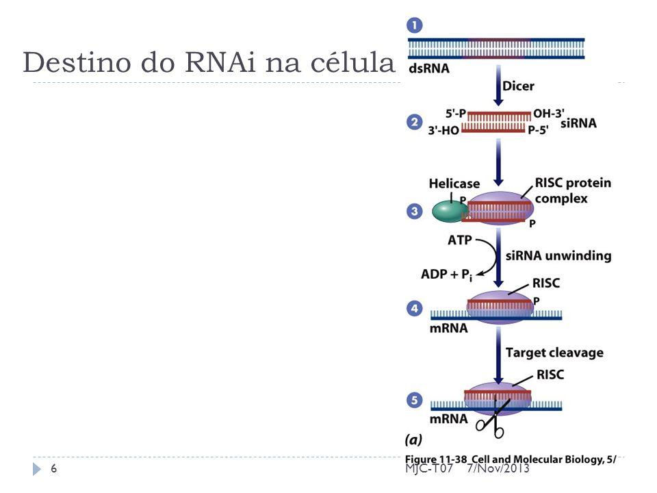 Destino do RNAi na célula 7/Nov/20136MJC-T07