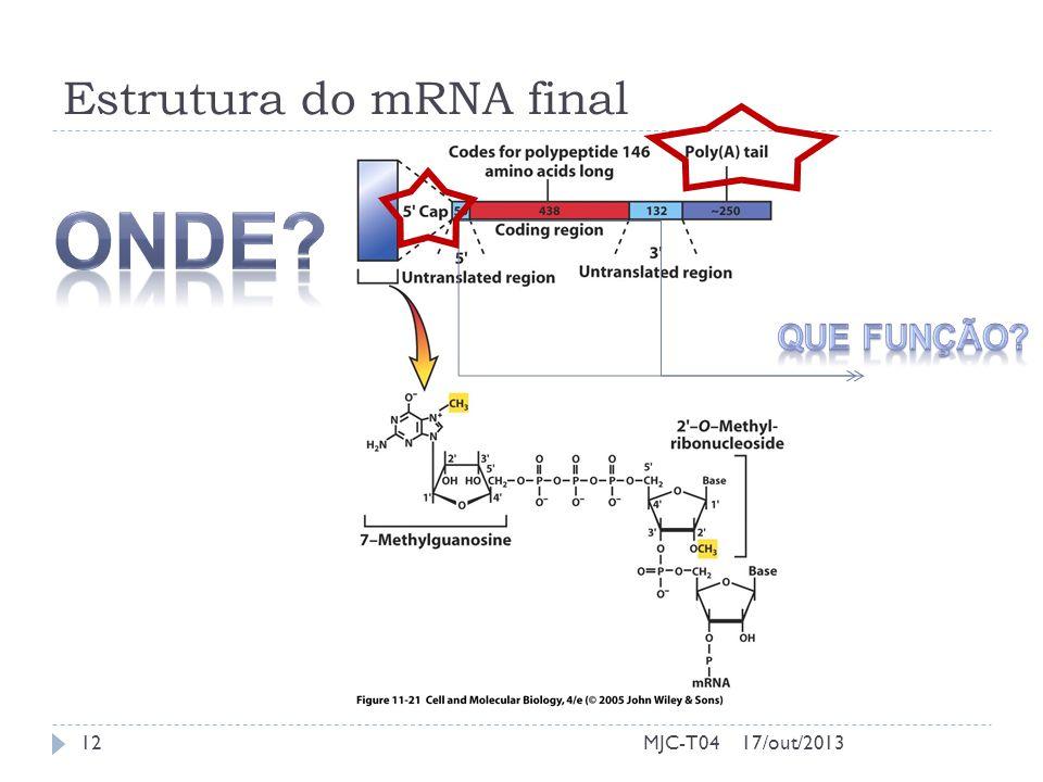 Estrutura do mRNA final 17/out/201312MJC-T04