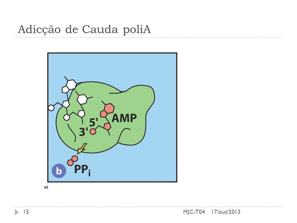 Adicção de Cauda poliA 17/out/201315MJC-T04