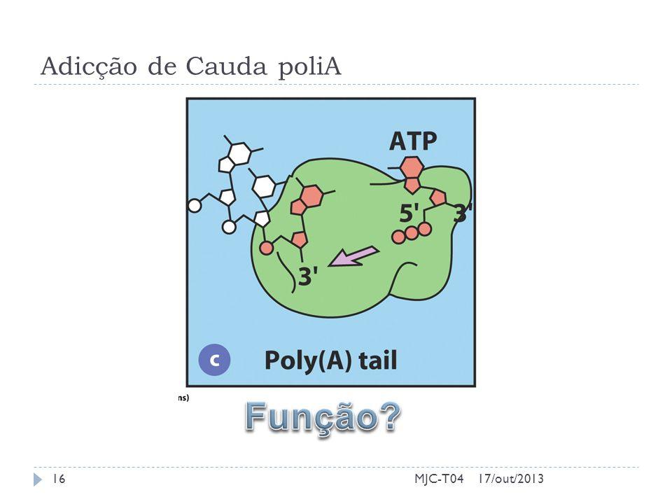 Adicção de Cauda poliA 17/out/201316MJC-T04