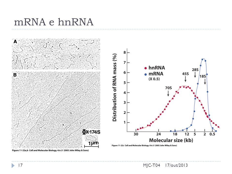 mRNA e hnRNA 17/out/201317MJC-T04