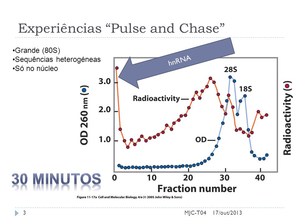 Experiências Pulse and Chase 17/out/2013MJC-T043 Grande (80S) Sequências heterogéneas Só no núcleo hnRNA