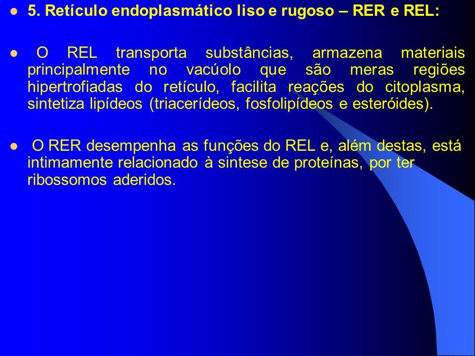 5. Retículo endoplasmático liso e rugoso – RER e REL: O REL transporta substâncias, armazena materiais principalmente no vacúolo que são meras regiões