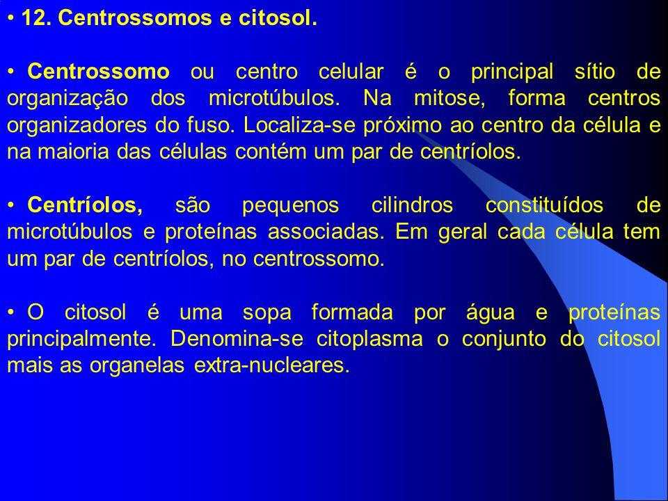 12. Centrossomos e citosol. Centrossomo ou centro celular é o principal sítio de organização dos microtúbulos. Na mitose, forma centros organizadores