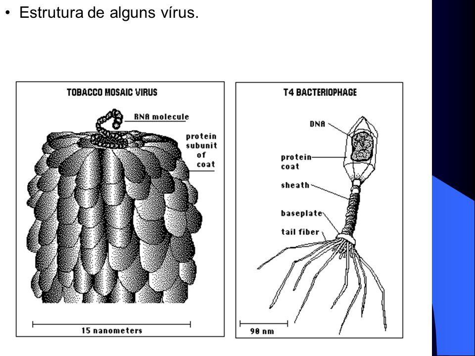 : as células procarióticas.
