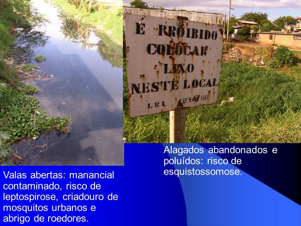Valas abertas: manancial contaminado, risco de leptospirose, criadouro de mosquitos urbanos e abrigo de roedores. Alagados abandonados e poluídos: ris