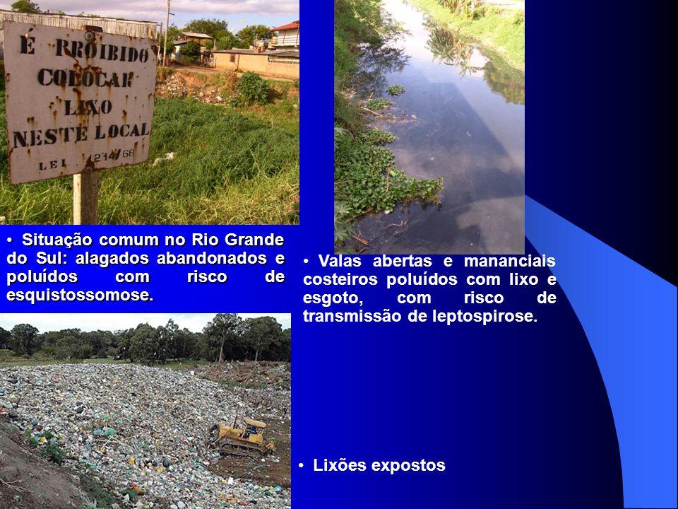 Situação comum no Rio Grande do Sul: alagados abandonados e poluídos com risco de esquistossomose. Situação comum no Rio Grande do Sul: alagados aband