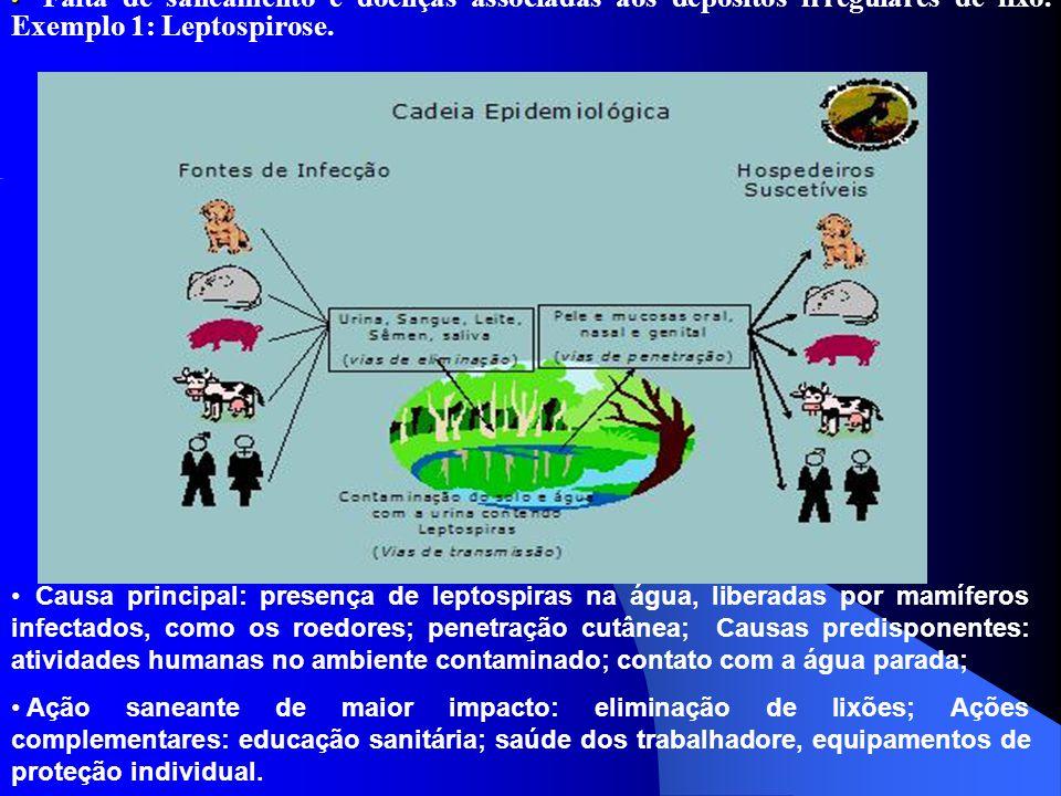 Falta de saneamento e doenças associadas aos depósitos irregulares de lixo. Exemplo 1: Leptospirose. Causa principal: presença de leptospiras na água,