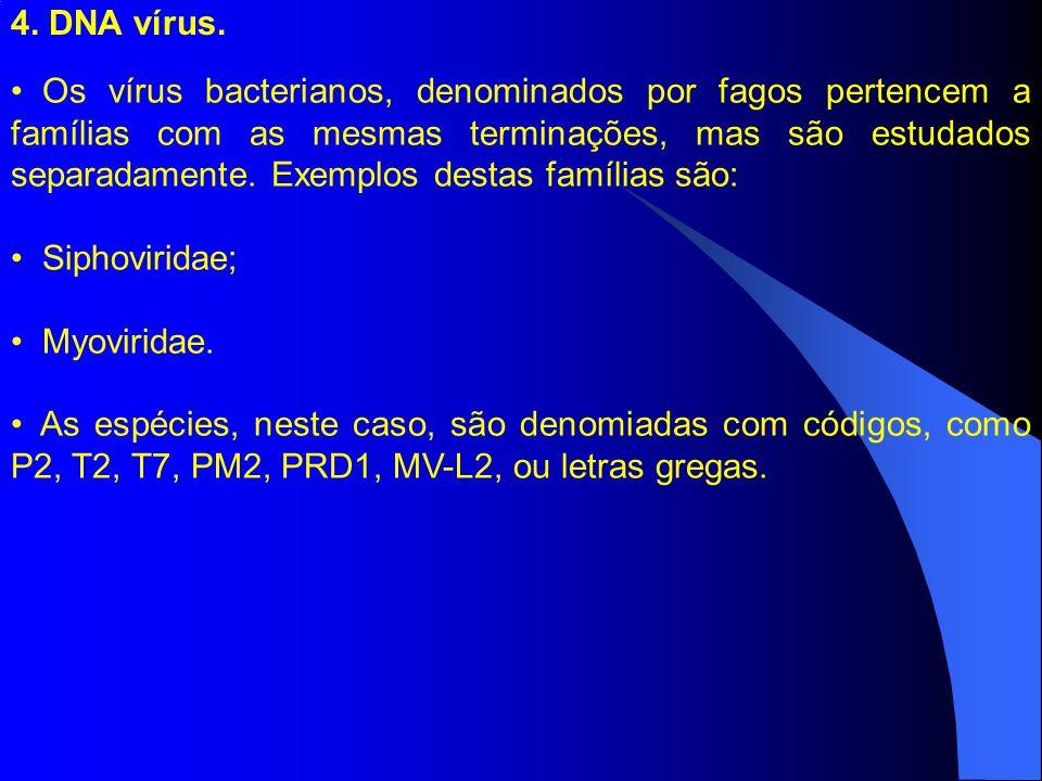 4. DNA vírus. Os vírus bacterianos, denominados por fagos pertencem a famílias com as mesmas terminações, mas são estudados separadamente. Exemplos de