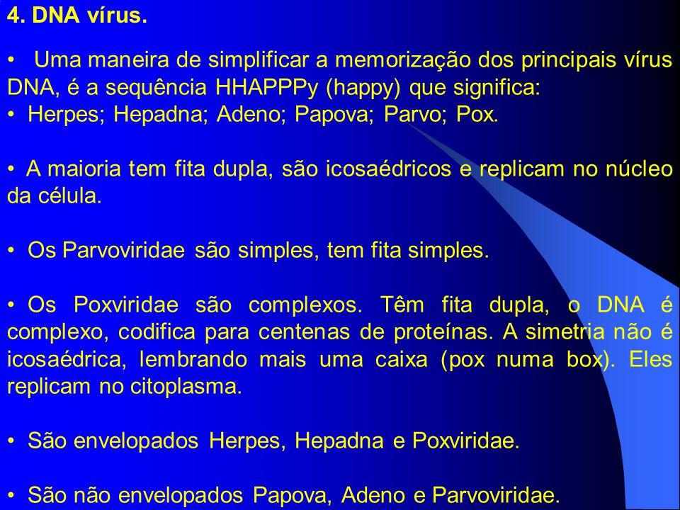4. DNA vírus. Uma maneira de simplificar a memorização dos principais vírus DNA, é a sequência HHAPPPy (happy) que significa: Herpes; Hepadna; Adeno;