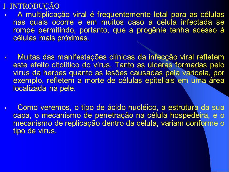 4.DNA vírus.