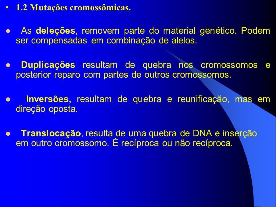 1.2 Mutações cromossômicas. As deleções, removem parte do material genético. Podem ser compensadas em combinação de alelos. Duplicações resultam de qu