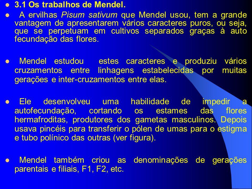 3.1 Os trabalhos de Mendel. A ervilhas Pisum sativum que Mendel usou, tem a grande vantagem de apresentarem vários caracteres puros, ou seja, que se p