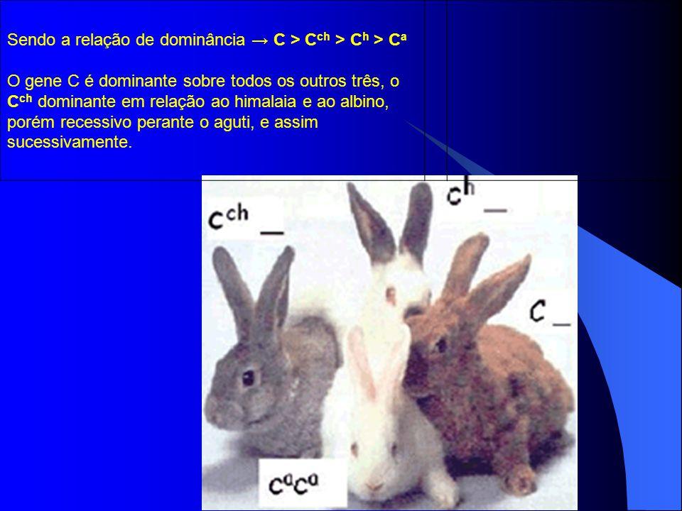 Sendo a relação de dominância C > C ch > C h > C a O gene C é dominante sobre todos os outros três, o C ch dominante em relação ao himalaia e ao albin