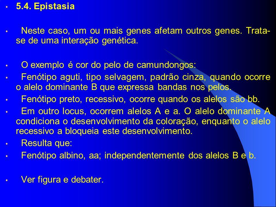 5.4. Epistasia Neste caso, um ou mais genes afetam outros genes. Trata- se de uma interação genética. O exemplo é cor do pelo de camundongos: Fenótipo