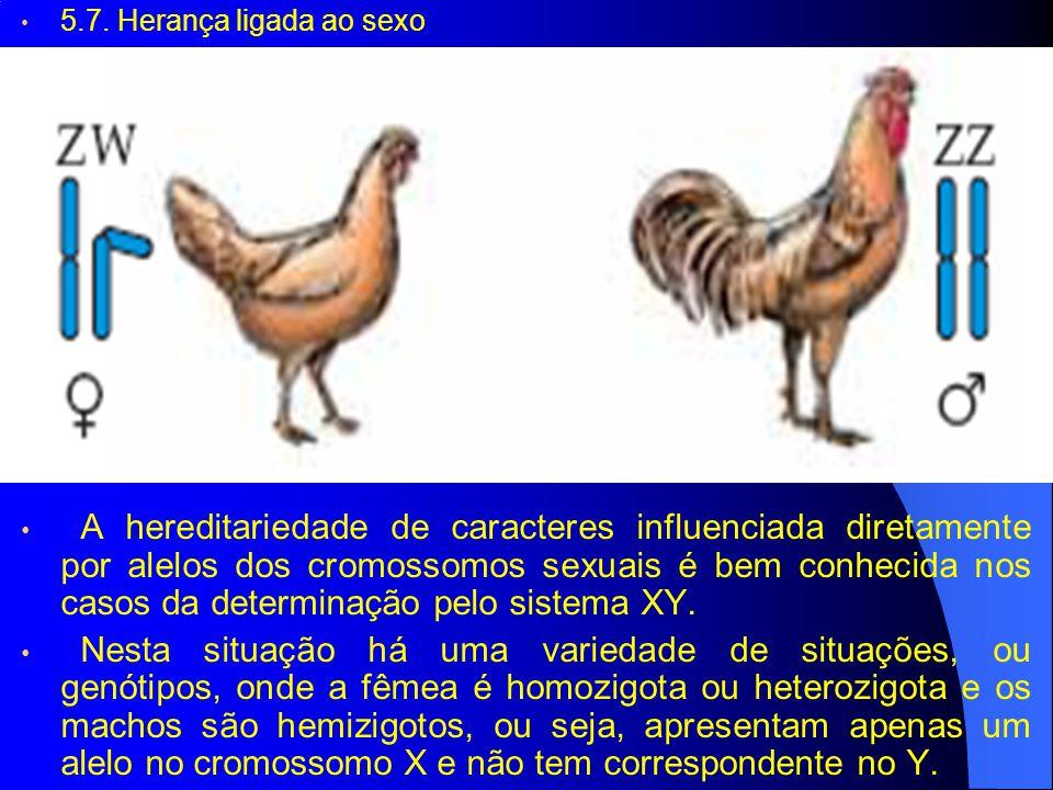 5.7. Herança ligada ao sexo A hereditariedade de caracteres influenciada diretamente por alelos dos cromossomos sexuais é bem conhecida nos casos da d