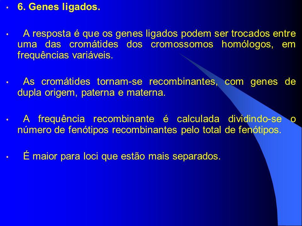 6. Genes ligados. A resposta é que os genes ligados podem ser trocados entre uma das cromátides dos cromossomos homólogos, em frequências variáveis. A
