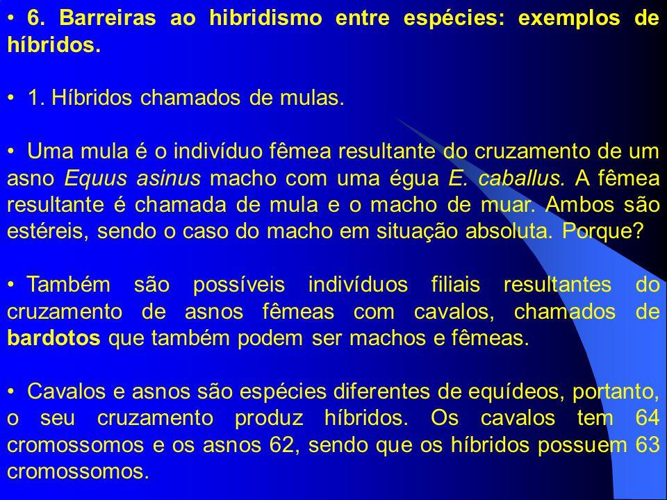 6. Barreiras ao hibridismo entre espécies: exemplos de híbridos. 1. Híbridos chamados de mulas. Uma mula é o indivíduo fêmea resultante do cruzamento