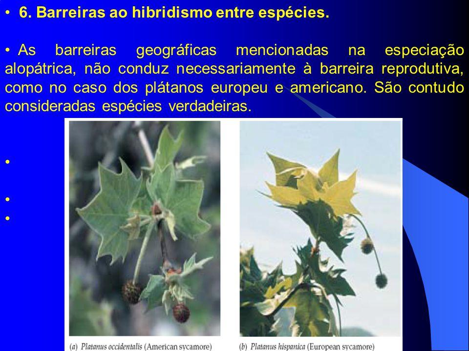 6. Barreiras ao hibridismo entre espécies. As barreiras geográficas mencionadas na especiação alopátrica, não conduz necessariamente à barreira reprod
