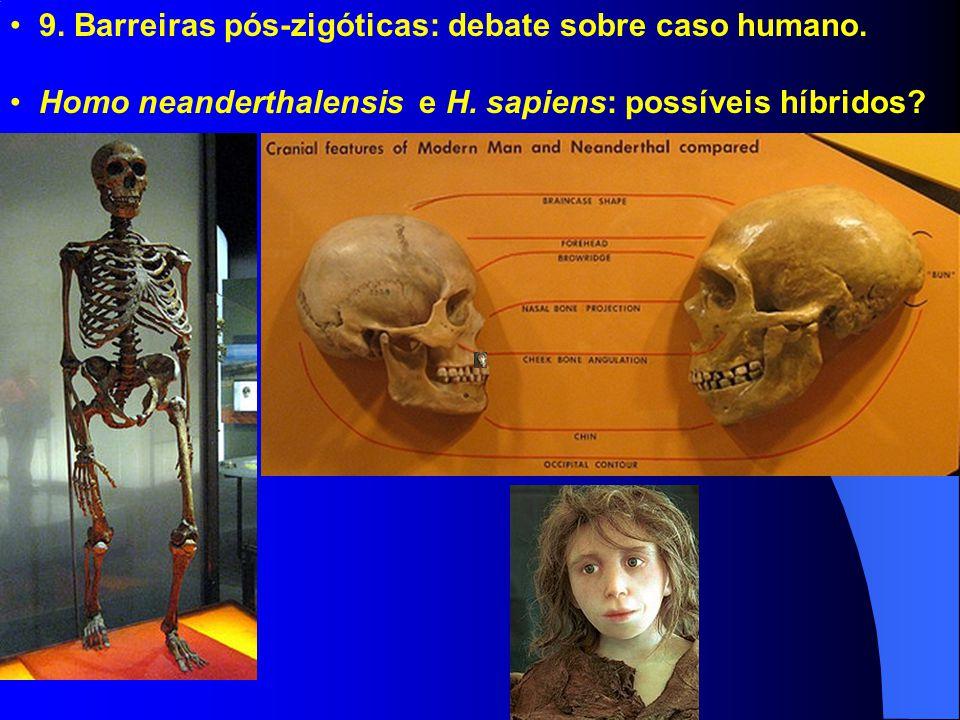 9. Barreiras pós-zigóticas: debate sobre caso humano. Homo neanderthalensis e H. sapiens: possíveis híbridos?
