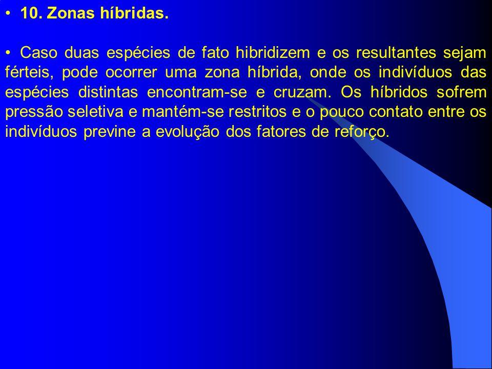 10. Zonas híbridas. Caso duas espécies de fato hibridizem e os resultantes sejam férteis, pode ocorrer uma zona híbrida, onde os indivíduos das espéci
