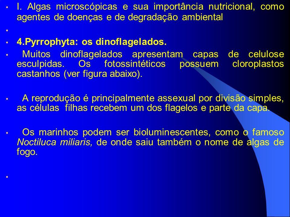 I. Algas microscópicas e sua importância nutricional, como agentes de doenças e de degradação ambiental 4.Pyrrophyta: os dinoflagelados. Muitos dinofl