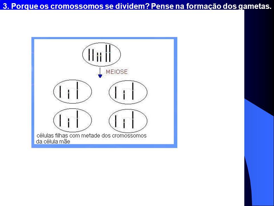 3. Porque os cromossomos se dividem? Pense na formação dos gametas.
