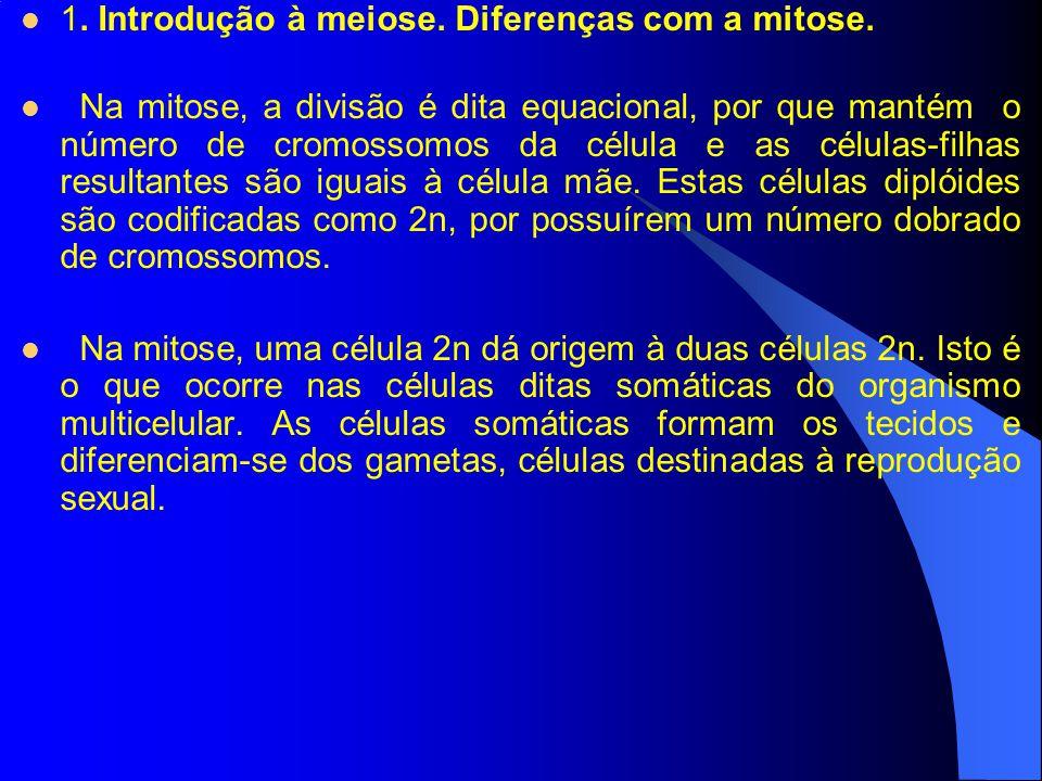 1. Introdução à meiose. Diferenças com a mitose. Na mitose, a divisão é dita equacional, por que mantém o número de cromossomos da célula e as células