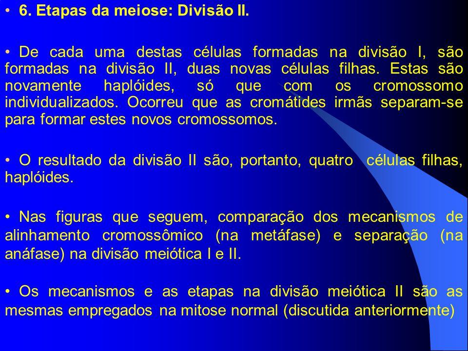 6.Etapas da meiose: Divisão II.