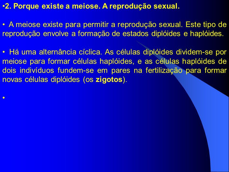 2. Porque existe a meiose. A reprodução sexual. A meiose existe para permitir a reprodução sexual. Este tipo de reprodução envolve a formação de estad