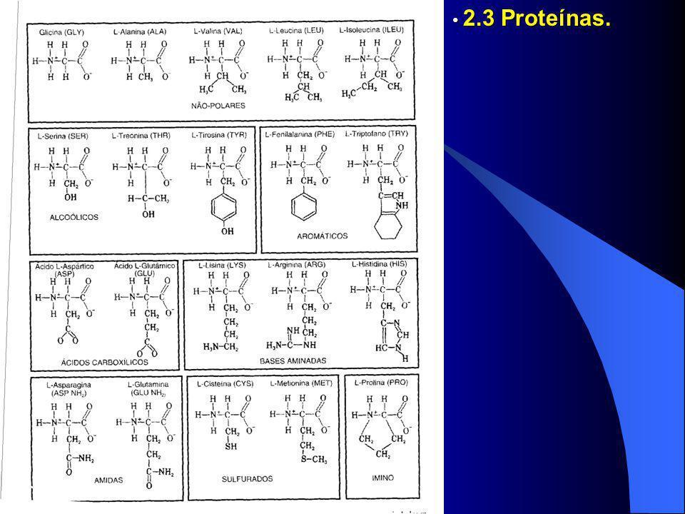 2.3 Proteínas. 2.3 Proteínas.
