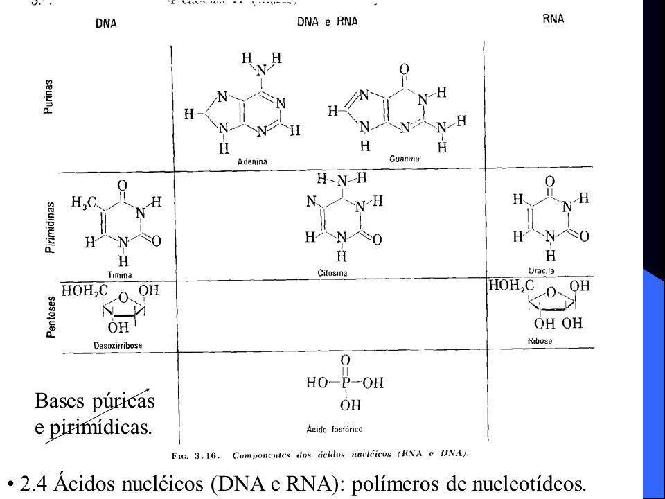 2.4 Ácidos nucléicos (DNA e RNA): polímeros de nucleotídeos. Bases púricas e pirimídicas.
