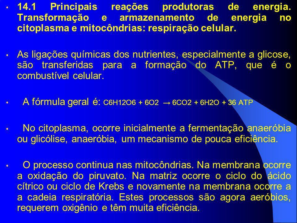 14.1 Principais reações produtoras de energia. Transformação e armazenamento de energia no citoplasma e mitocôndrias: respiração celular. As ligações