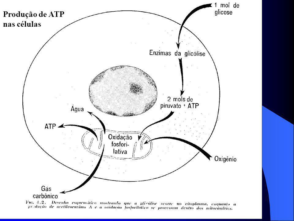 Produção de ATP nas células