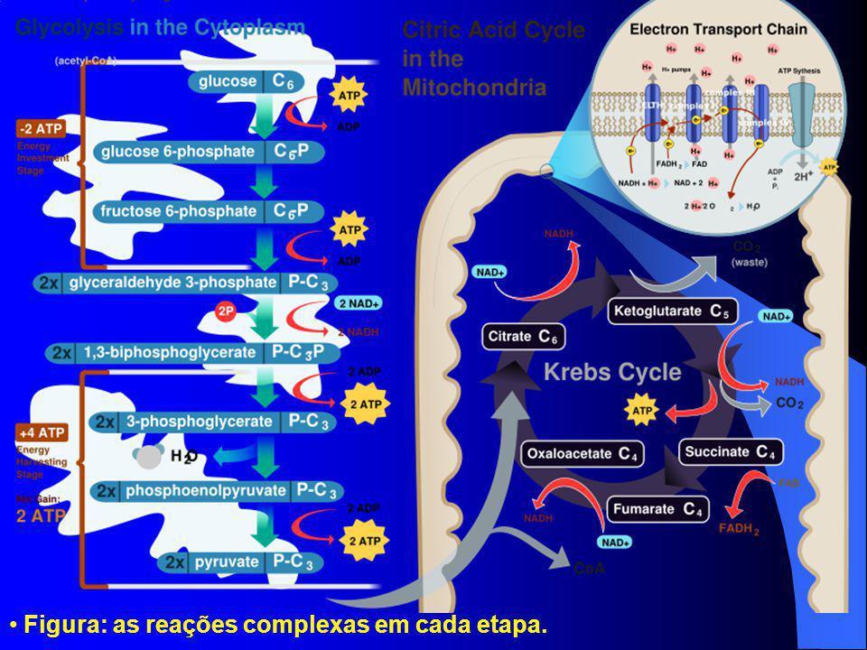 Figura: as reações complexas em cada etapa.