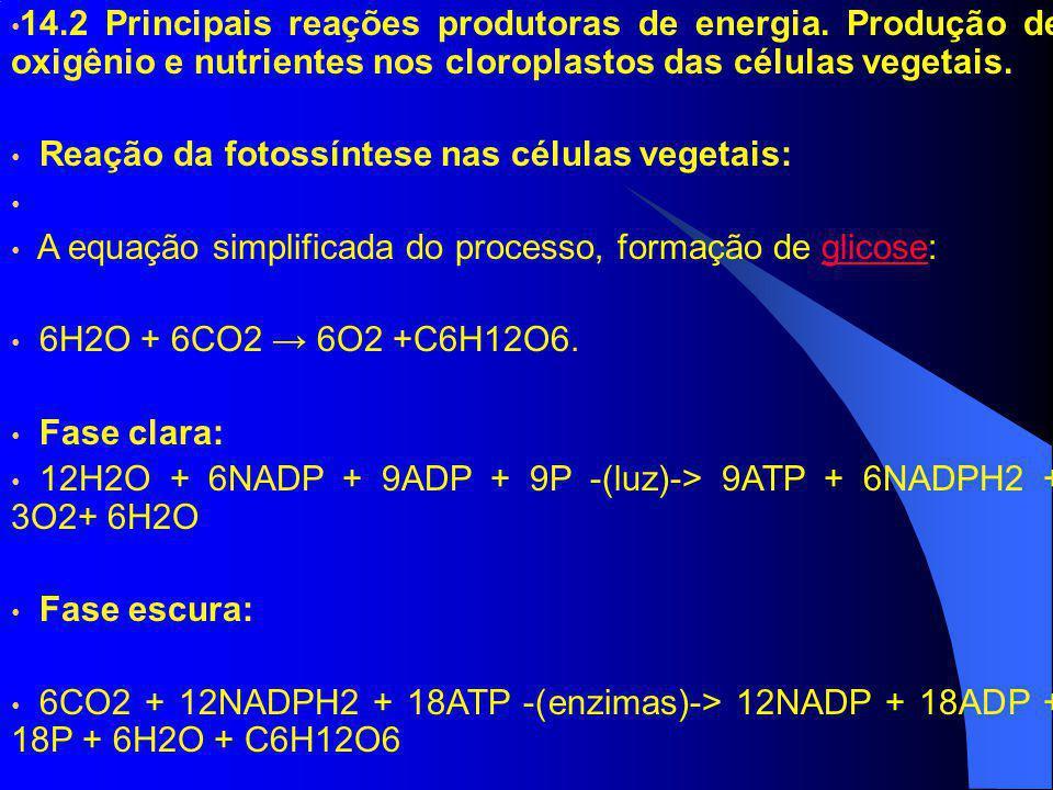 14.2 Principais reações produtoras de energia. Produção de oxigênio e nutrientes nos cloroplastos das células vegetais. Reação da fotossíntese nas cél