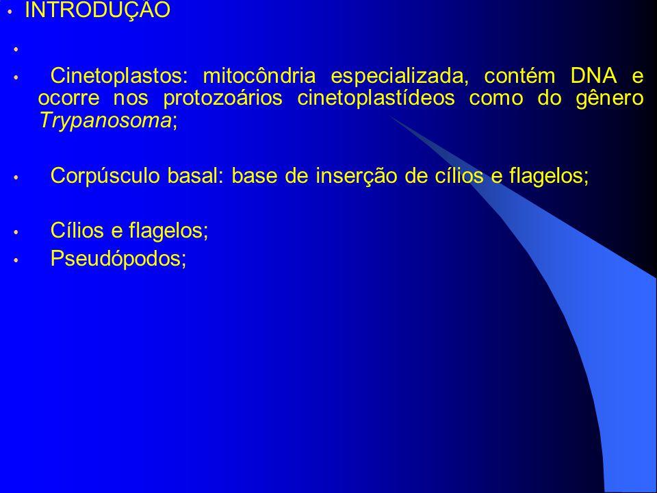 Cinetoplastos: mitocôndria especializada, contém DNA e ocorre nos protozoários cinetoplastídeos como do gênero Trypanosoma; Corpúsculo basal: base de inserção de cílios e flagelos; Cílios e flagelos; Pseudópodos; INTRODUÇÃO