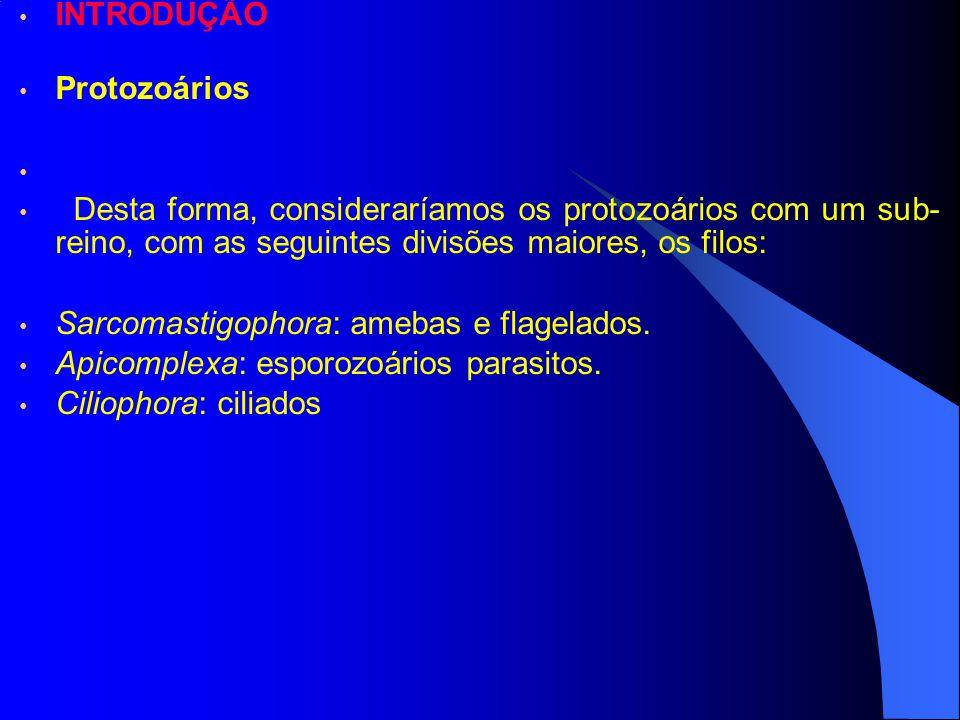 INTRODUÇÃO Protozoários Desta forma, consideraríamos os protozoários com um sub- reino, com as seguintes divisões maiores, os filos: Sarcomastigophora: amebas e flagelados.