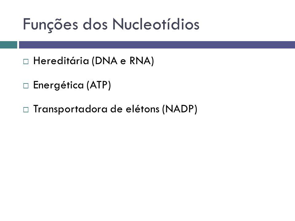 Funções dos Nucleotídios Hereditária (DNA e RNA) Energética (ATP) Transportadora de elétons (NADP)