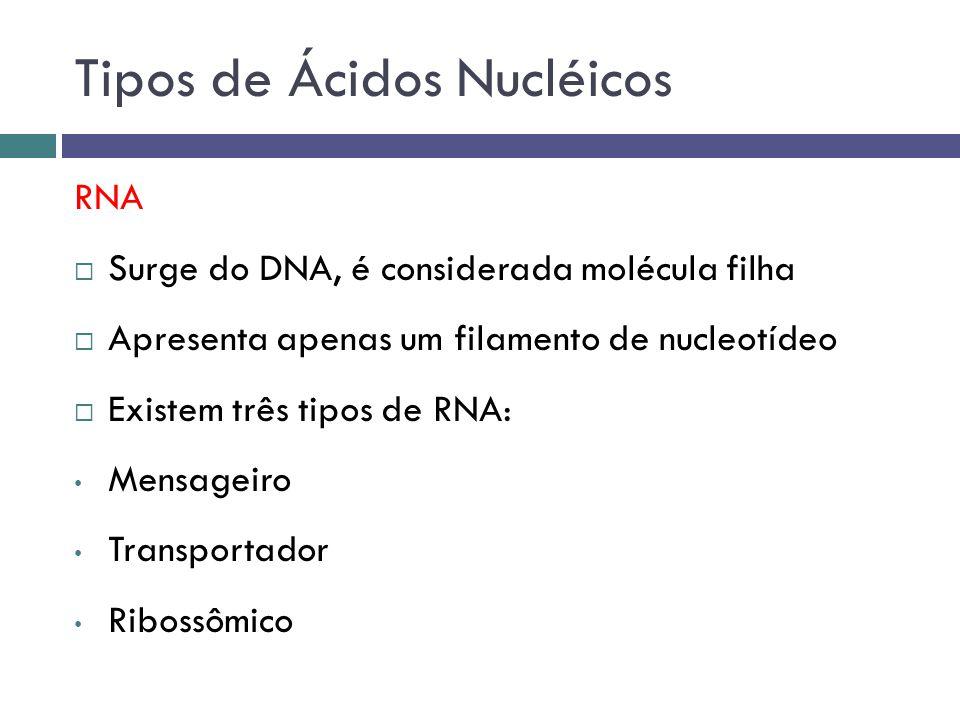 RNA Surge do DNA, é considerada molécula filha Apresenta apenas um filamento de nucleotídeo Existem três tipos de RNA: Mensageiro Transportador Riboss