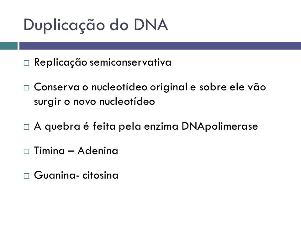 Duplicação do DNA Replicação semiconservativa Conserva o nucleotídeo original e sobre ele vão surgir o novo nucleotídeo A quebra é feita pela enzima D