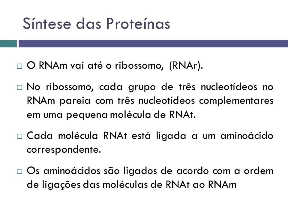 Síntese das Proteínas O RNAm vai até o ribossomo, (RNAr). No ribossomo, cada grupo de três nucleotídeos no RNAm pareia com três nucleotídeos complemen