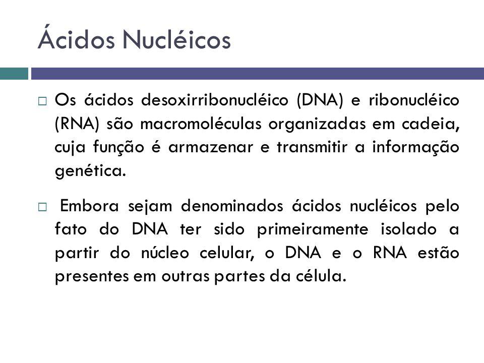Ácidos Nucléicos Os ácidos desoxirribonucléico (DNA) e ribonucléico (RNA) são macromoléculas organizadas em cadeia, cuja função é armazenar e transmit