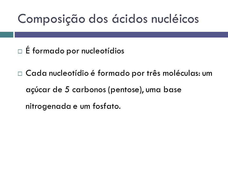 Composição dos nucleotídeos Existe dois tipos de pentoses Desoxirribose - DNA Ribose - RNA Existe cinco tipos de bases nitrogenadas Adenina – A Timina – T - DNA Guanina - G Citosina - C Uracil – U - RNA