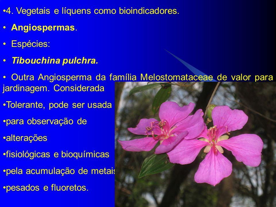 4.Vegetais e líquens como bioindicadores. Angiospermas.