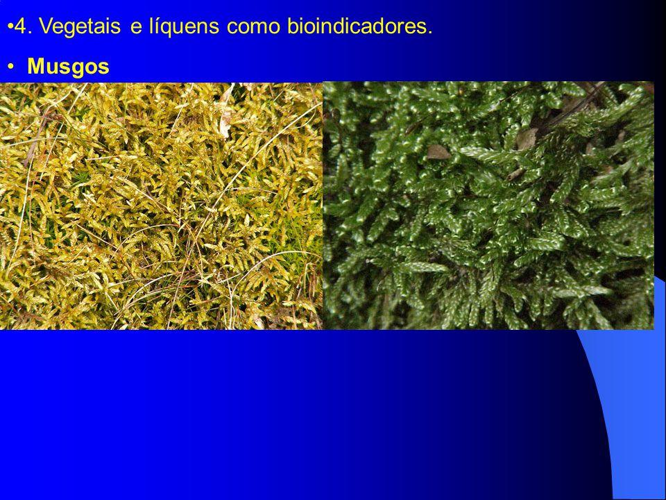 4. Vegetais e líquens como bioindicadores. Musgos