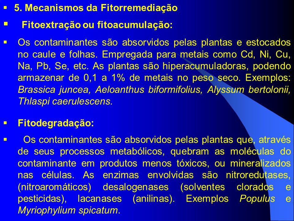 5. Mecanismos da Fitorremediação Fitoextração ou fitoacumulação: Os contaminantes são absorvidos pelas plantas e estocados no caule e folhas. Empregad