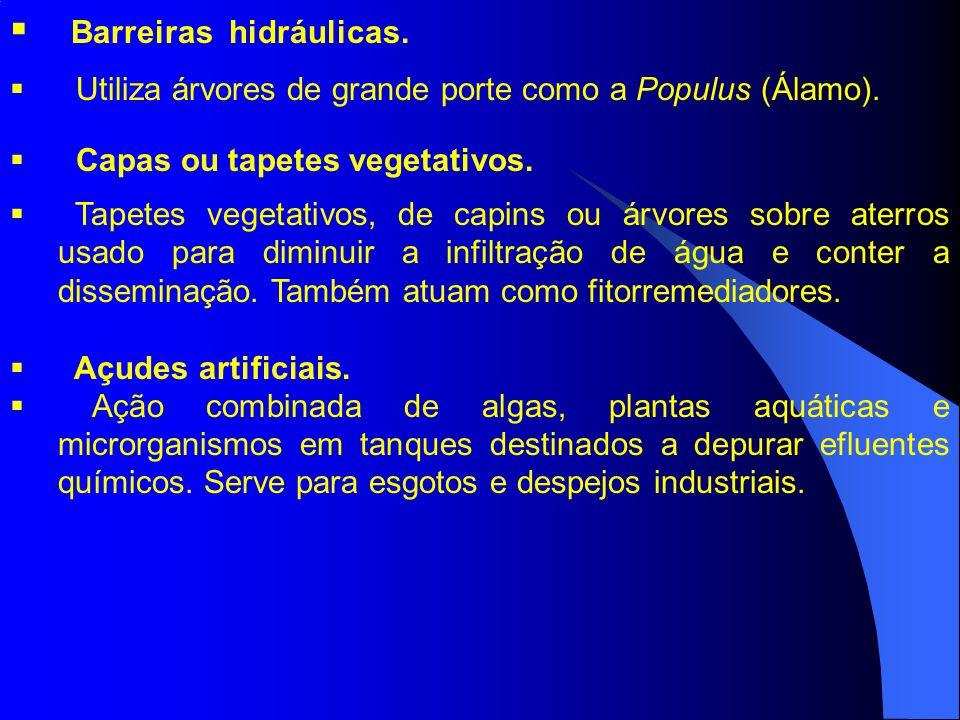 Barreiras hidráulicas. Utiliza árvores de grande porte como a Populus (Álamo). Capas ou tapetes vegetativos. Tapetes vegetativos, de capins ou árvores