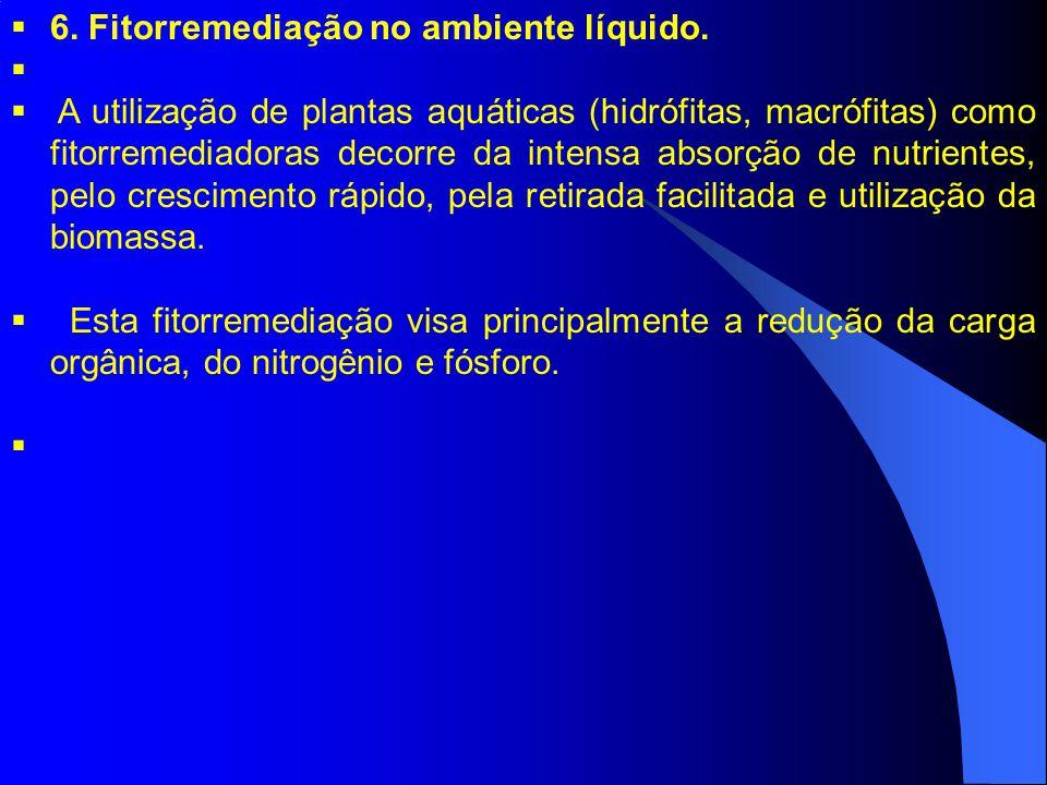 6. Fitorremediação no ambiente líquido. A utilização de plantas aquáticas (hidrófitas, macrófitas) como fitorremediadoras decorre da intensa absorção
