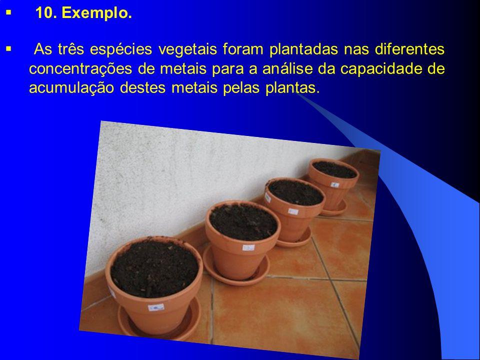 As três espécies vegetais foram plantadas nas diferentes concentrações de metais para a análise da capacidade de acumulação destes metais pelas plantas.